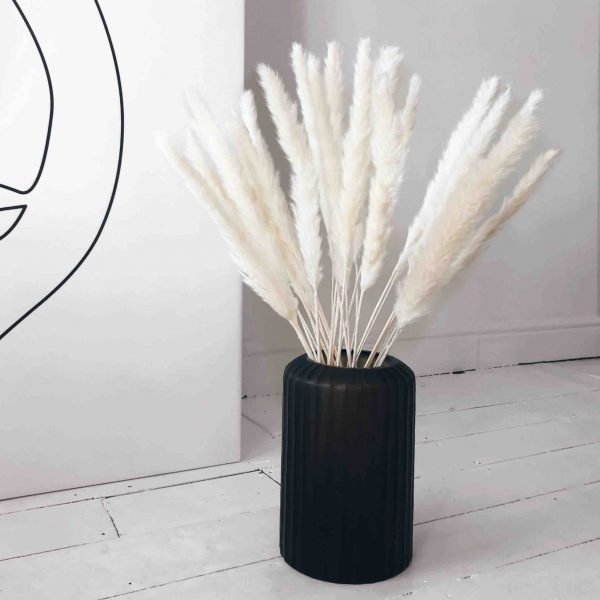 Bleached feather reed grass pampas, small pampas, white pampas, pampas grass decor, pampas decor, dried pampas, pampas uk