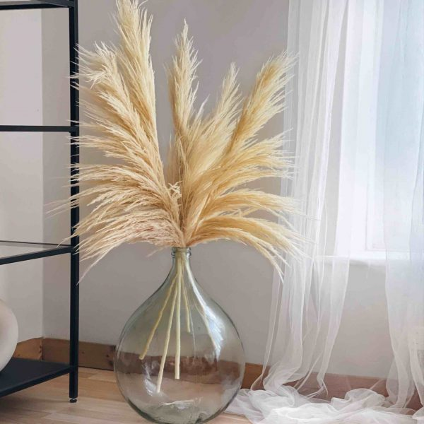 huge pampas, bleached pampas, cream pampas, ivory pampas, white pampas, pampas grass, fluffy pampas
